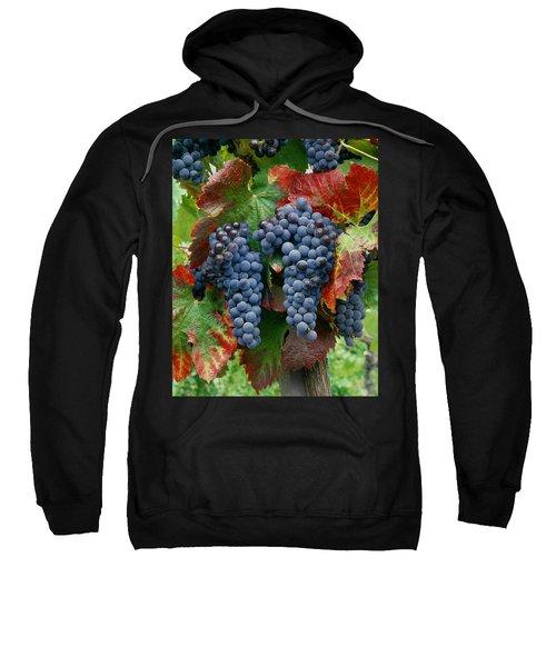 5b6374-cabernet Sauvignon Grapes At Harvest Sweatshirt