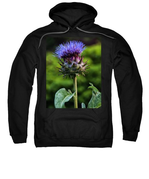 Cardoon Sweatshirt