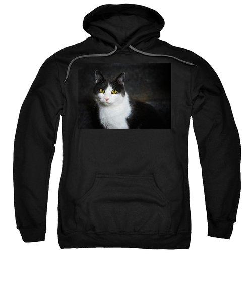 Cat Portrait With Texture Sweatshirt by Matthias Hauser