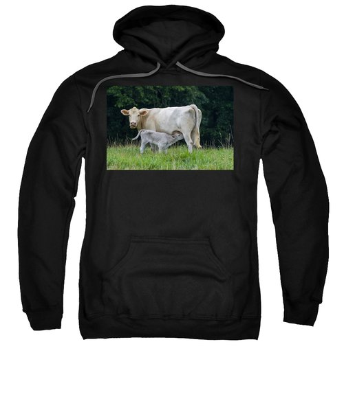 Charolais Cattle Nursing Young Sweatshirt