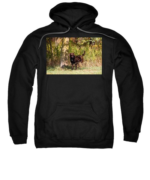 Chocolate Lab Cuteness Sweatshirt
