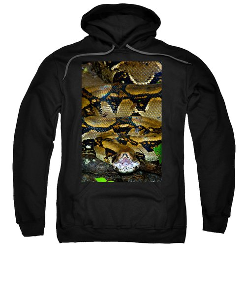 Close-up Of A Boa Constrictor, Arenal Sweatshirt