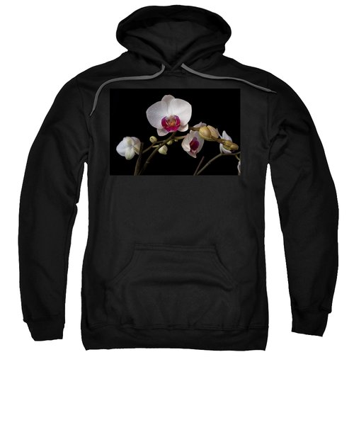 Colorful Moth Orchid Sweatshirt