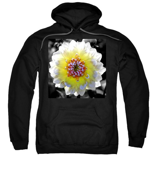 Colorwheel Sweatshirt