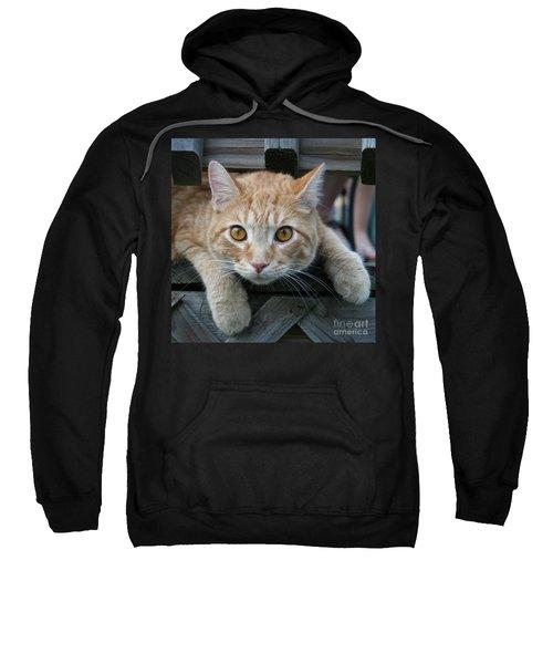 Cool Cat Named Calvin Sweatshirt