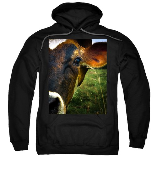 Cow Eating Grass Sweatshirt by Bob Orsillo