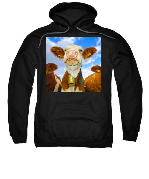 Cow Looking At You - Funny Animal Picture Sweatshirt
