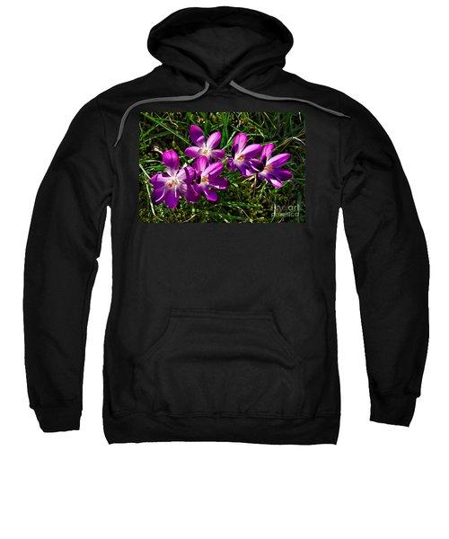 Crocus In The Grass Sweatshirt