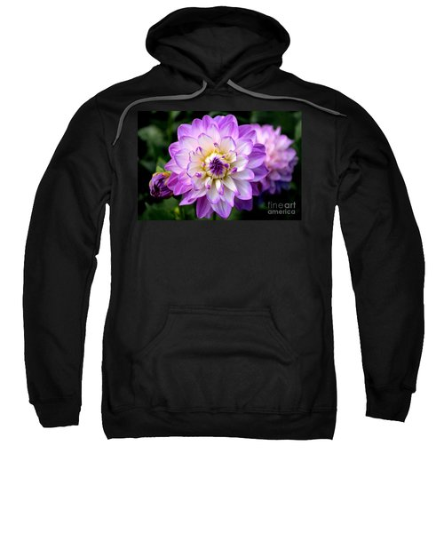 Dahlia Flower With Purple Tips Sweatshirt