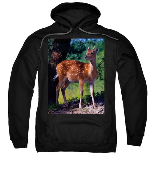 Deer In The Woods Sweatshirt