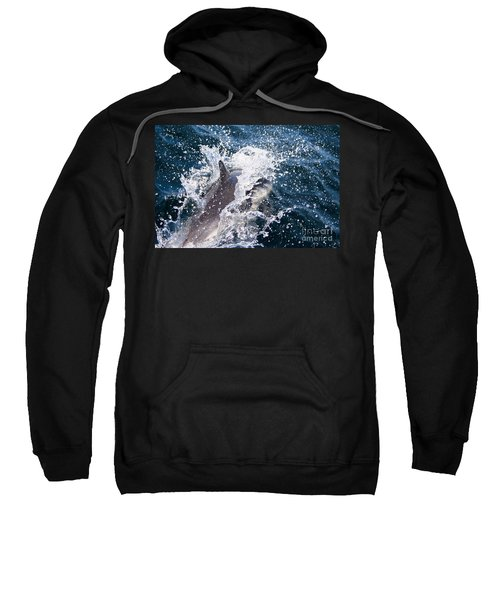 Dolphin Splash Sweatshirt