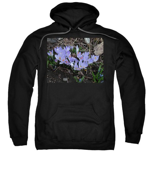 Sweatshirt featuring the photograph Early Crocuses by Donald S Hall