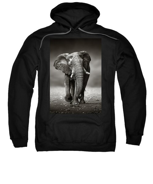 Elephant Approach From The Front Sweatshirt