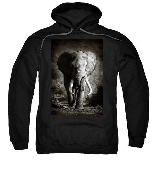 Elephant Bull Sweatshirt