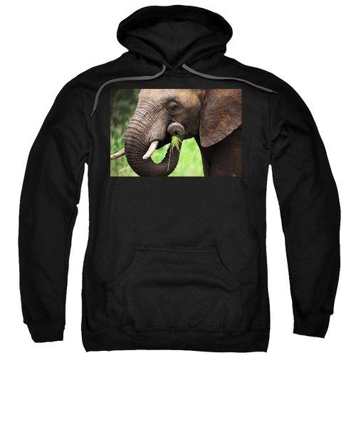 Elephant Eating Close-up Sweatshirt