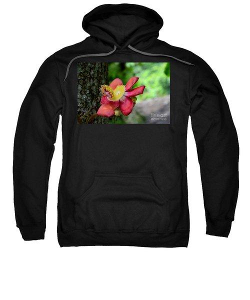 Flower Of Cannonball Tree Singapore Sweatshirt
