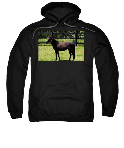 Furry Pony Sweatshirt