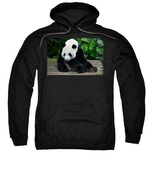 Giant Panda With Tongue Touching Nose At River Safari Zoo Singapore Sweatshirt