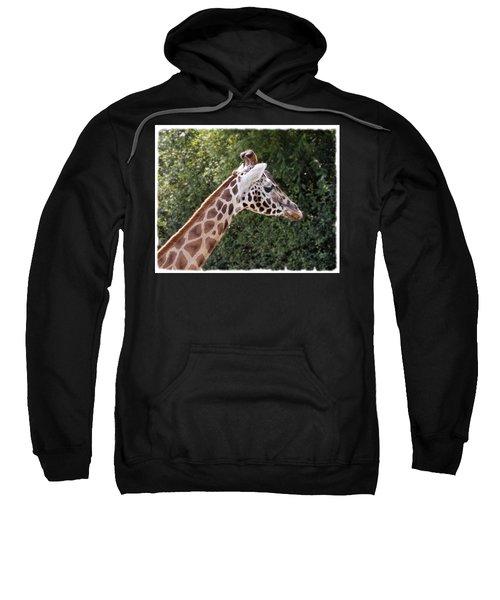 Giraffe 01 Sweatshirt