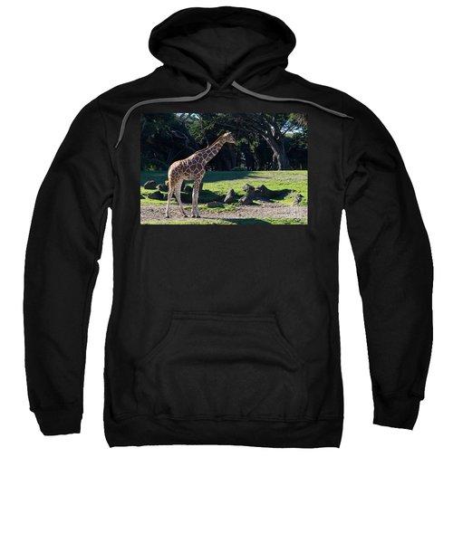 Giraffe Dsc2839 Sweatshirt