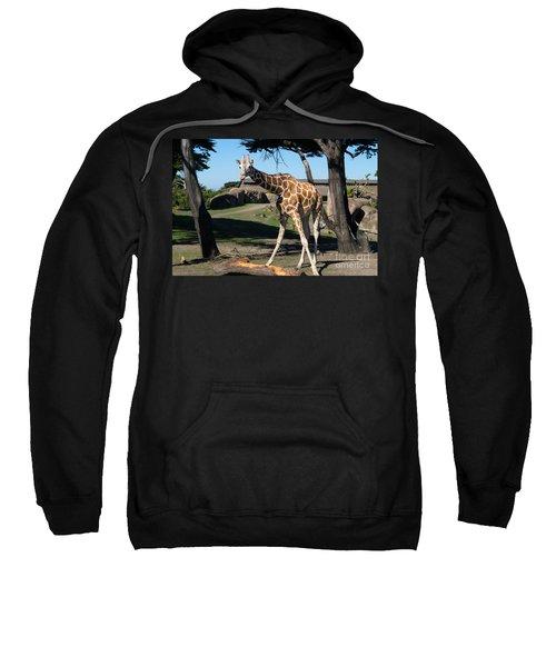 Giraffe Dsc2849 Sweatshirt