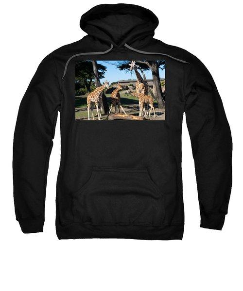 Giraffe Dsc2863 Sweatshirt