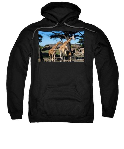 Giraffe Dsc2866 Sweatshirt