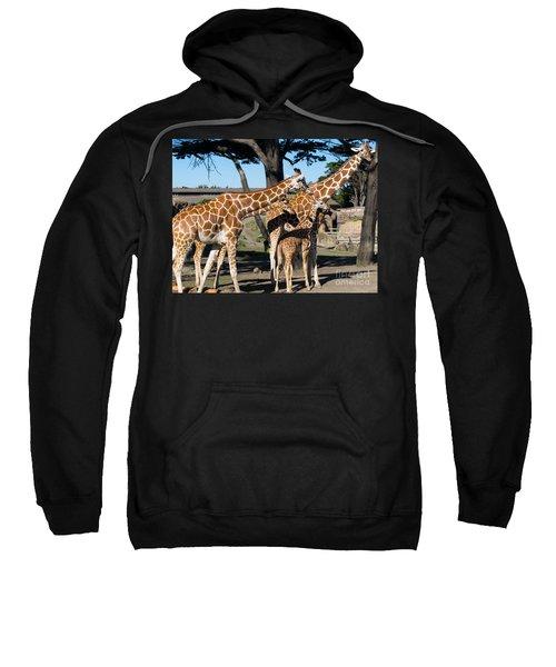 Giraffe Dsc2875 Sweatshirt