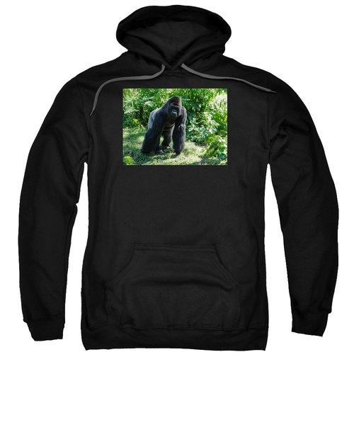 Gorilla In The Midst Sweatshirt