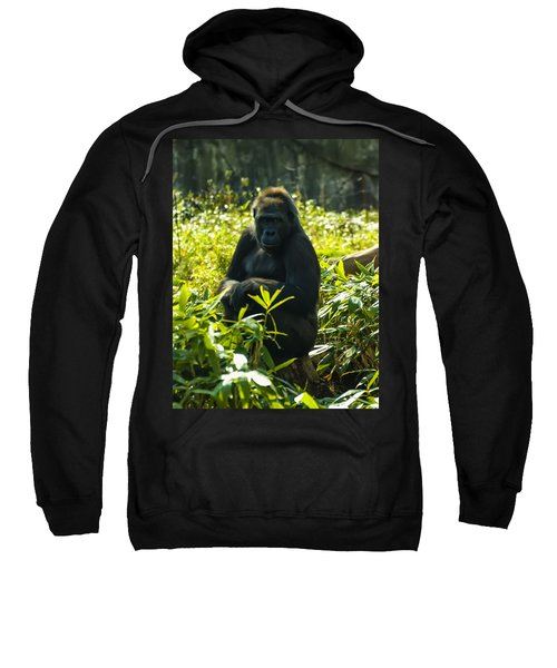 Gorilla Sitting On A Stump Sweatshirt