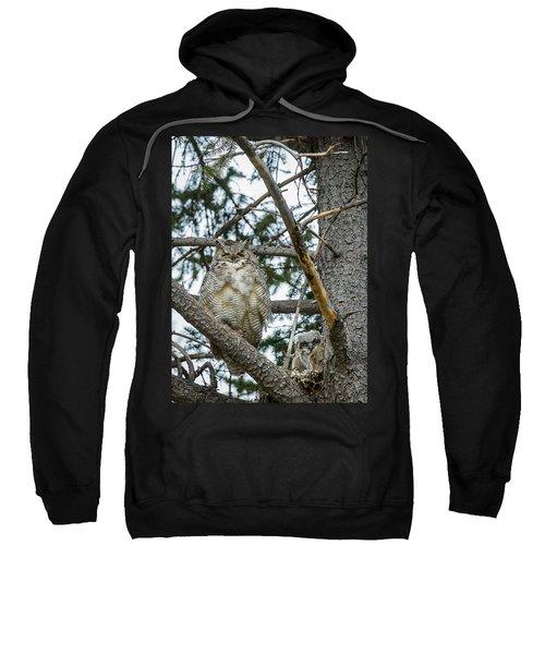 Great Horned Owl Sweatshirt