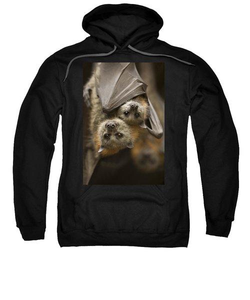 Hang In There Sweatshirt