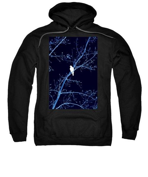 Hawk Silhouette On Blue Sweatshirt