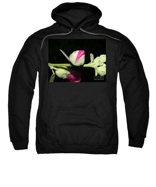 Hollyhock Buds Sweatshirt