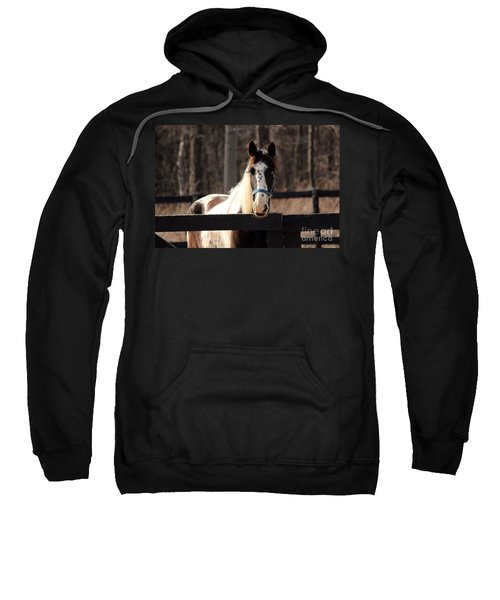 Horse At The Gate Sweatshirt