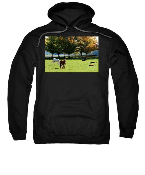 Horses In Fall Sweatshirt