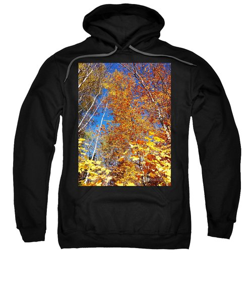 In The Forest At Fall Sweatshirt