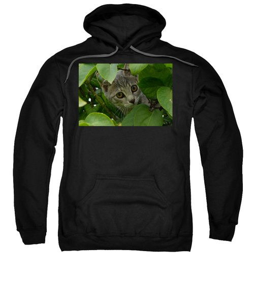 Kitten In The Bushes Sweatshirt