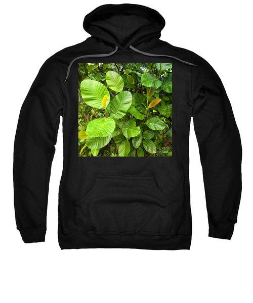 Leafs Of A Wild Gum Tree Sweatshirt