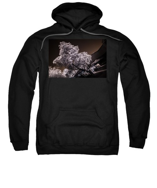 Lincoln Road Tree Sweatshirt