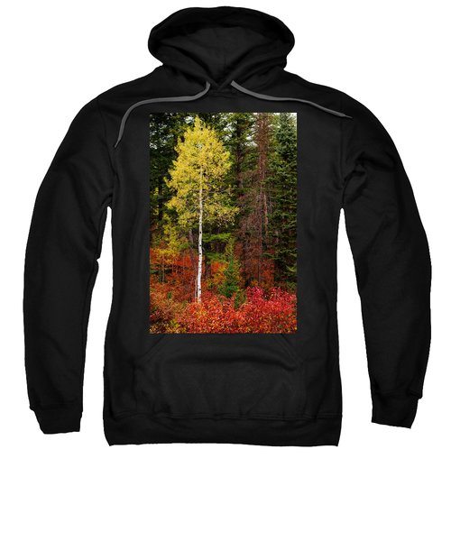 Lone Aspen In Fall Sweatshirt