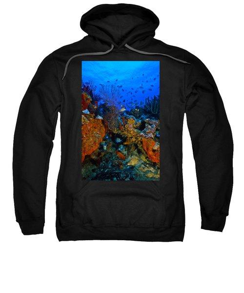 Lynns Reef Sweatshirt