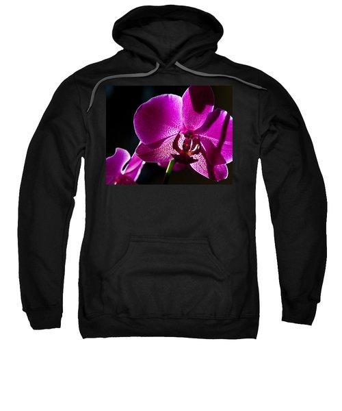 Magenta Orchid Sweatshirt