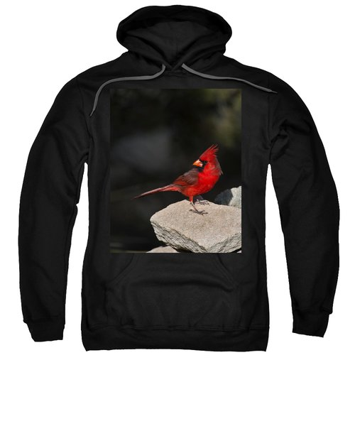 Male Cardinal Sweatshirt by Gary Langley