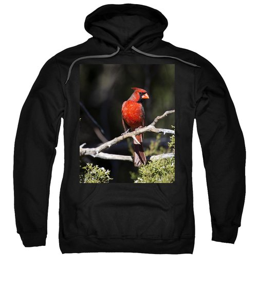 Male Northern Cardinal Sweatshirt by Gary Langley