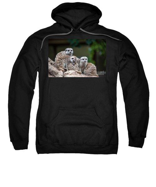 Meerkat Family Sweatshirt
