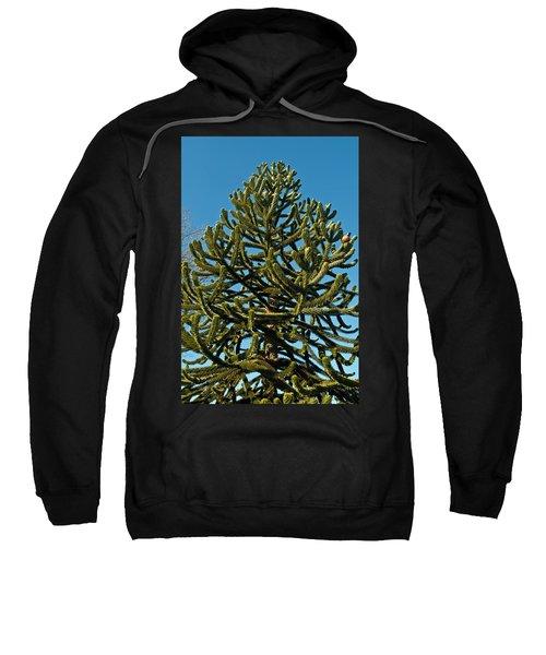 Monkey Puzzle Tree E Sweatshirt