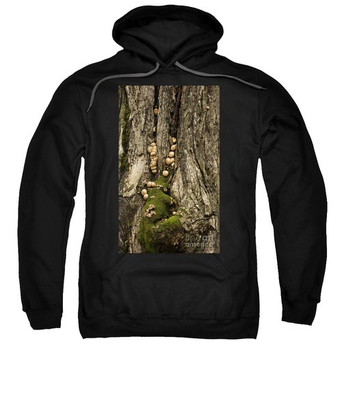 Moss-shrooms On A Tree Sweatshirt