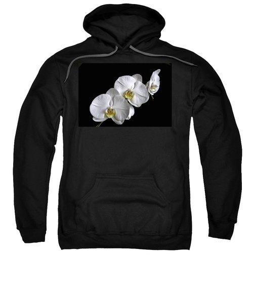 Moth Orchid Trio Sweatshirt