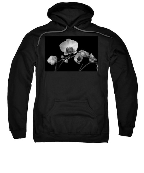 Moth Orchids Sweatshirt